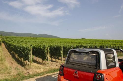 Vins-Bruno-Hertz_2