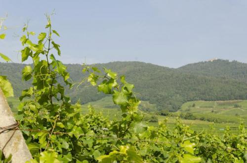 Vins-Bruno-Hertz_4